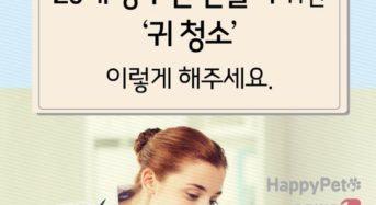 [펫카드] 20세 장수견 위한 '귀 청소' 방법