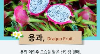 [Story Cook] 동남아 가면 꼭 먹어야 하는 과일
