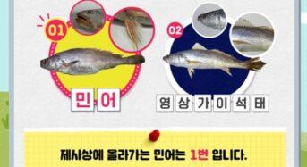 추석 명품 '진짜' 참돔·참조기·민어 구별법