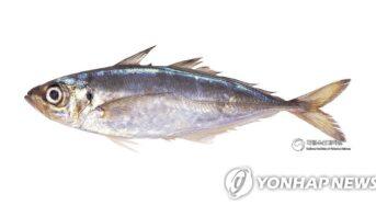 [해물기행] 이름 자체가 '맛'…회·초밥에 제격