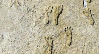 """미국 대륙에 찍힌 2만3천년전 발자국…""""인류정착 훨씬 오래전 일"""""""