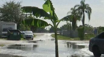 [영상] 도로 한복판에 바나나 나무 심은 이유는?